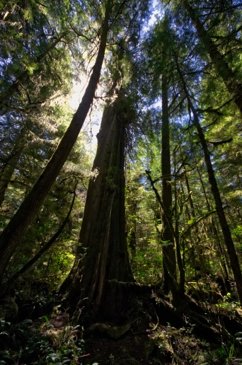 Rain forest hike on the West Coast of Vancouver Island