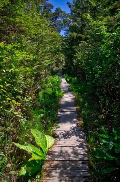 Most hiking trails are comprised of Boardwalks, Stairs and Bog