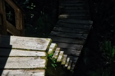 All trails on the west coast lead to never ending stairs