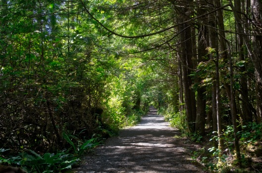 This trail winds through old growth cedar and hemlock forest before giving way to the Spruce fringe and sandy beach of halfmoon bay. During the 2km hike in and probably 200 stairs that descend to the beach we only ran into one lone hiker! Not a busy time of year that's for sure.