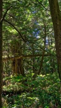 Scenery along Halfmoon Bay trail