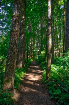 Local hike within Elk Falls Provincial Park