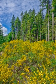 Wild flowers cover the country side throughout this part of Vancouver Island
