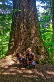 Massive trees fill this forest! The biggest ones are Western Red Cedars and Douglas Fir