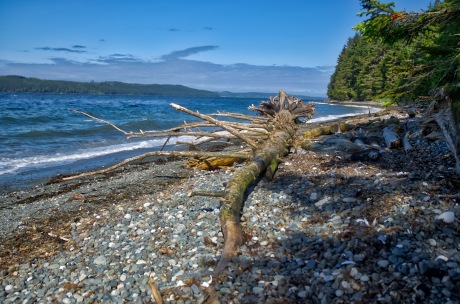 Driftwood scattered along the beach at Cluxewe RV Park